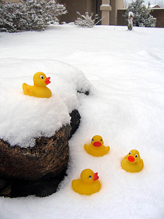 group-of-small-ducks-in-snow2